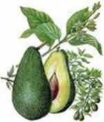 Rasta Tropical Fruit Avodado Pear Rasta Gear Shop